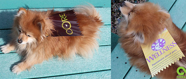 TerraCycle DIY dog cape