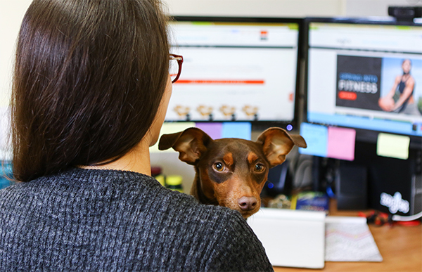person at desk with dog