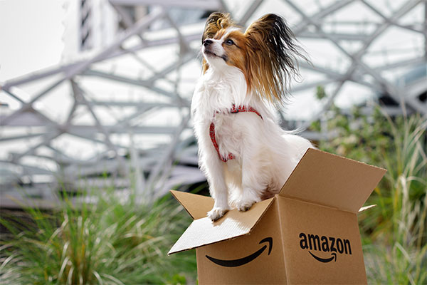 Amazon dog friendly
