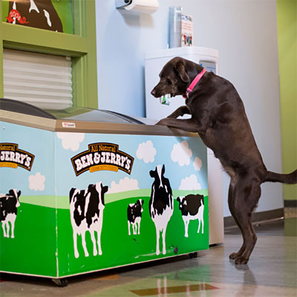 Ben & Jerry's dog in the office
