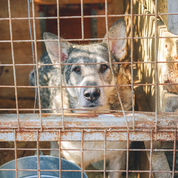 Adopt a Shelter Pet: Dog in crate