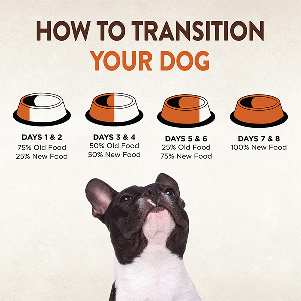 How to transition your dog to a new food