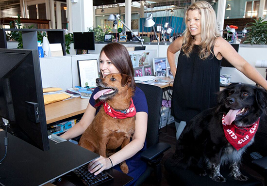 Clif Bar Dog Friendly Office