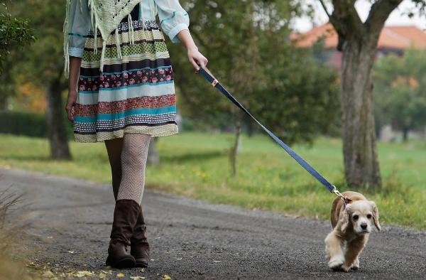 person walking a dog