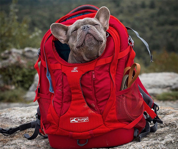 Kurgo backpack
