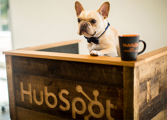 Hubspot Dog Friendly Office