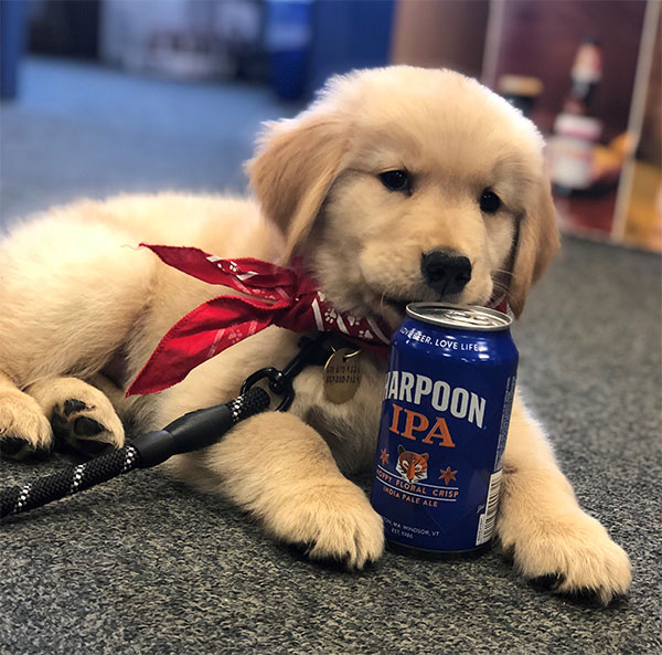 Harpoon brewery puppy in office