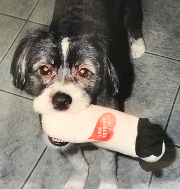young dog with toy