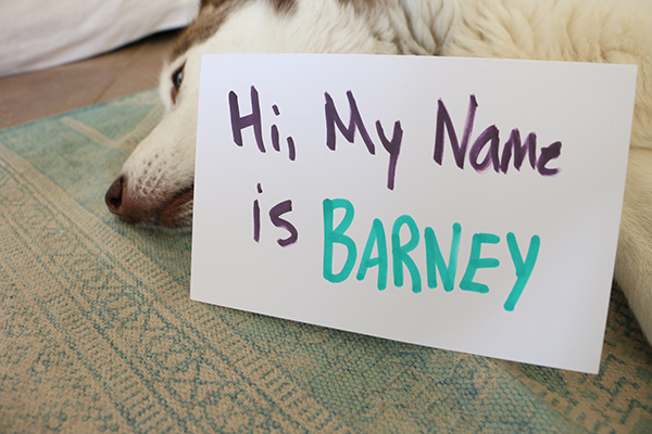 how to choose a name for your pet