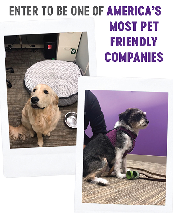 america's most pet friendly companies