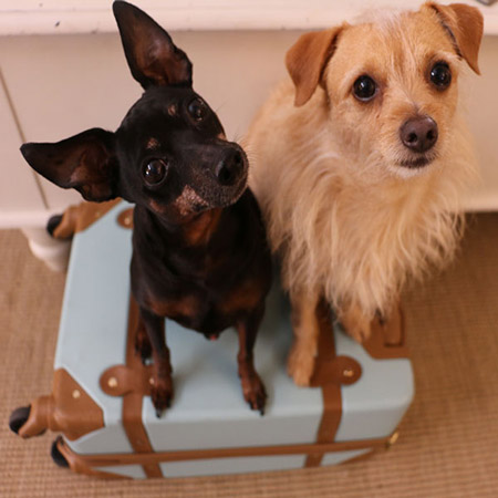 dogs on luggage