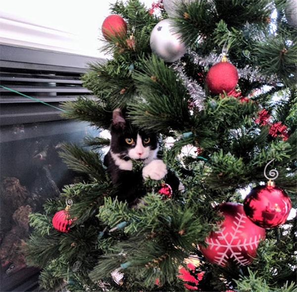 Are Christmas Trees Bad For Cats: 10 Cats In Christmas Trees, Just Because