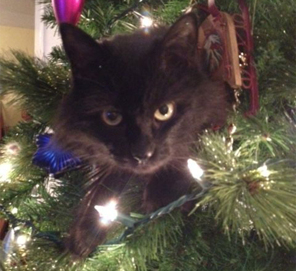 cat in a christmas tree - Black Cat Christmas Tree