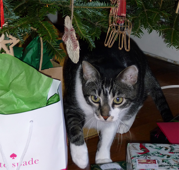 Cat underneath Christmas tree