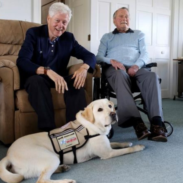 Sully service dog president Bush