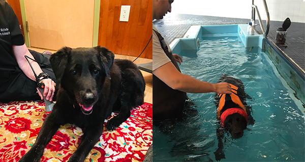 senior dog swim therapy