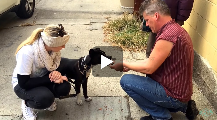 Wellness Donates over 8,000 Meals to Pet of the Homeless