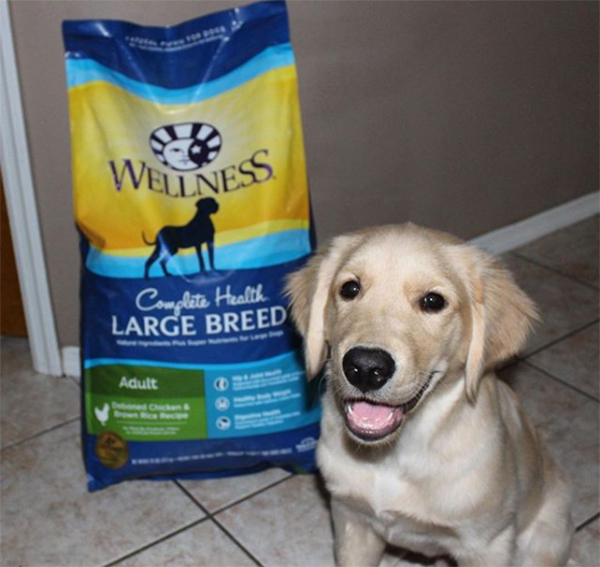 wellness pet food complete health dry dog food