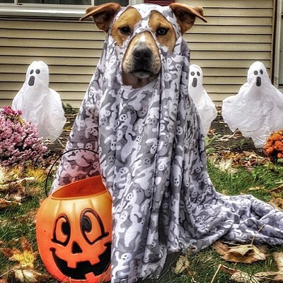 The purrfect howl o ween wellness pet food if you have a pet that doesnt mind suiting up in a festive halloween costume then you should consider yourself lucky not all pets will be jumping at the solutioingenieria Choice Image