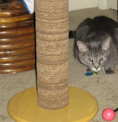kitty scratch pole