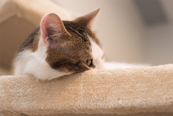 Cats May Scratch Belongings Because Of Stress