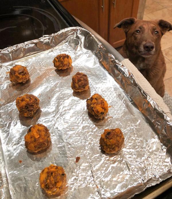 Diy Turkey Meatballs For Dogs Recipe Wellness Pet Food