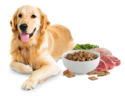 Image result for Pet Food