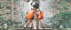 5 Tips On How To Make Your Dog Instagram Famous