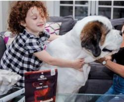 Beat the Back-to-School Pet Blues