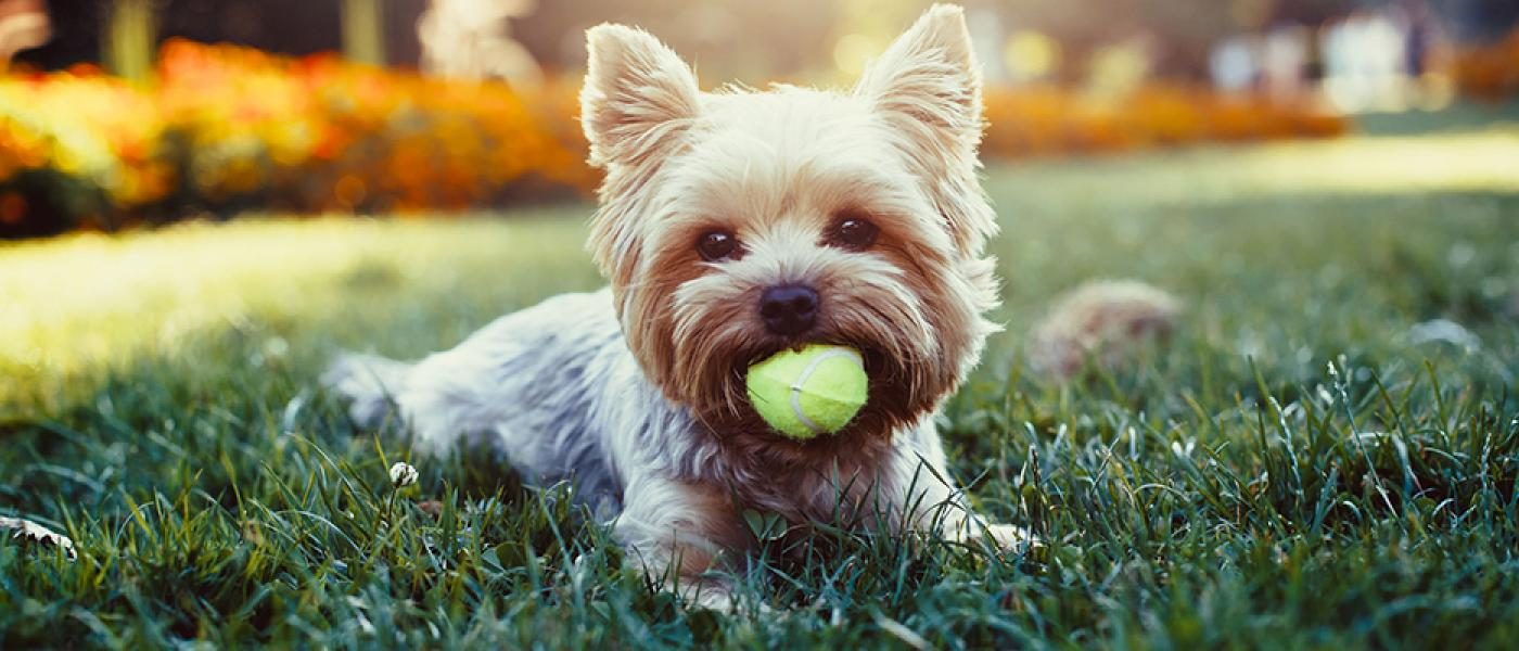 new dog owner s guide wellness pet food rh wellnesspetfood com Dog and Owner new dog owner guide