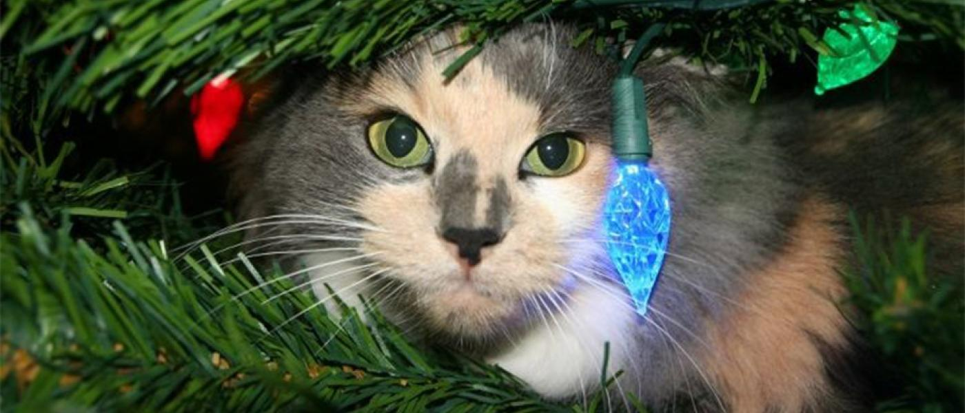 10 Cats In Christmas Trees, Just Because