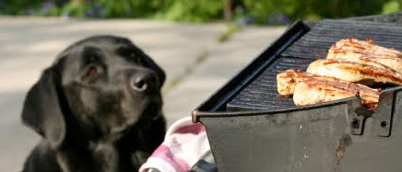 pet bbq safety tips wellness pet food