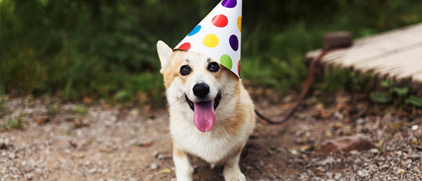 Complete List of 2019 Pet Holidays | Wellness Pet Food