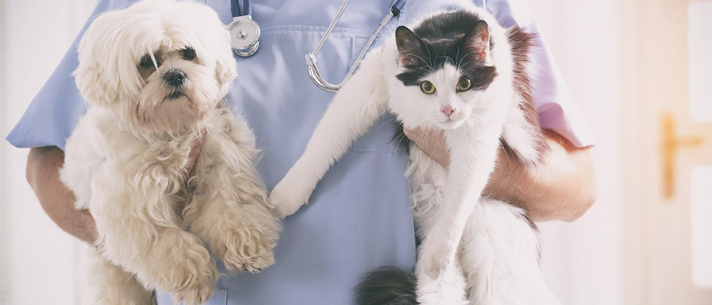 The Average Cost of Taking Your Pet to the Veterinarian | Wellness