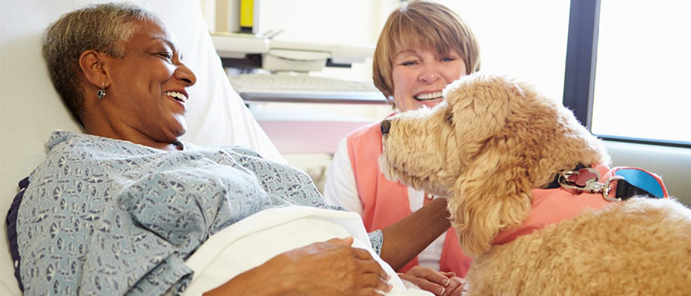 How to get your dog certified as a therapy dog wellness pet food therapy dogs provide an important and rewarding job for both the dog and the owner if you are interested in your pet becoming a certified therapy dog you 1betcityfo Image collections