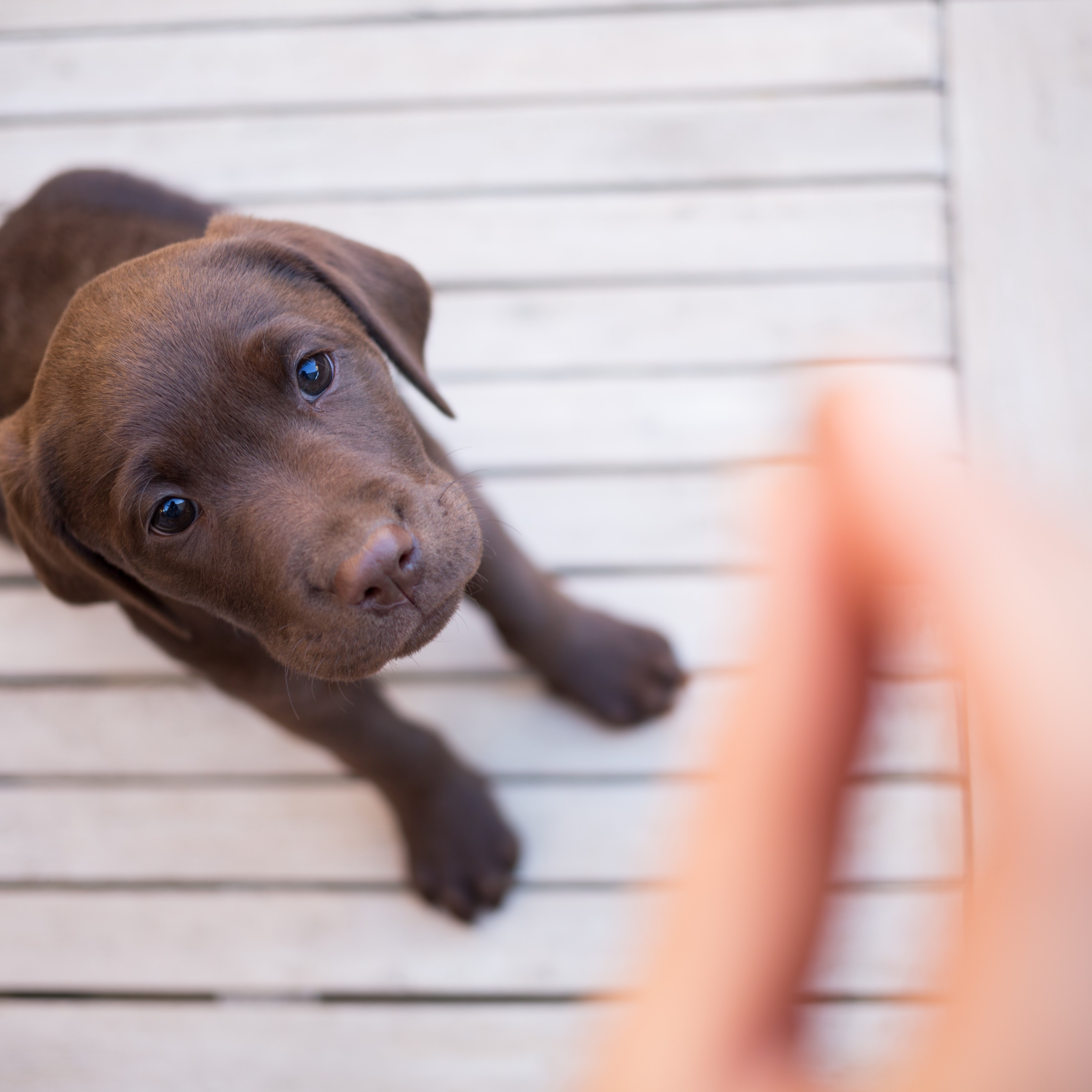 Make Every Mealtime Count Wellness Pet Food